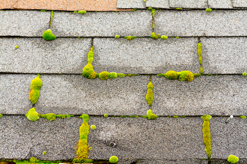 Green moss pictured on roof